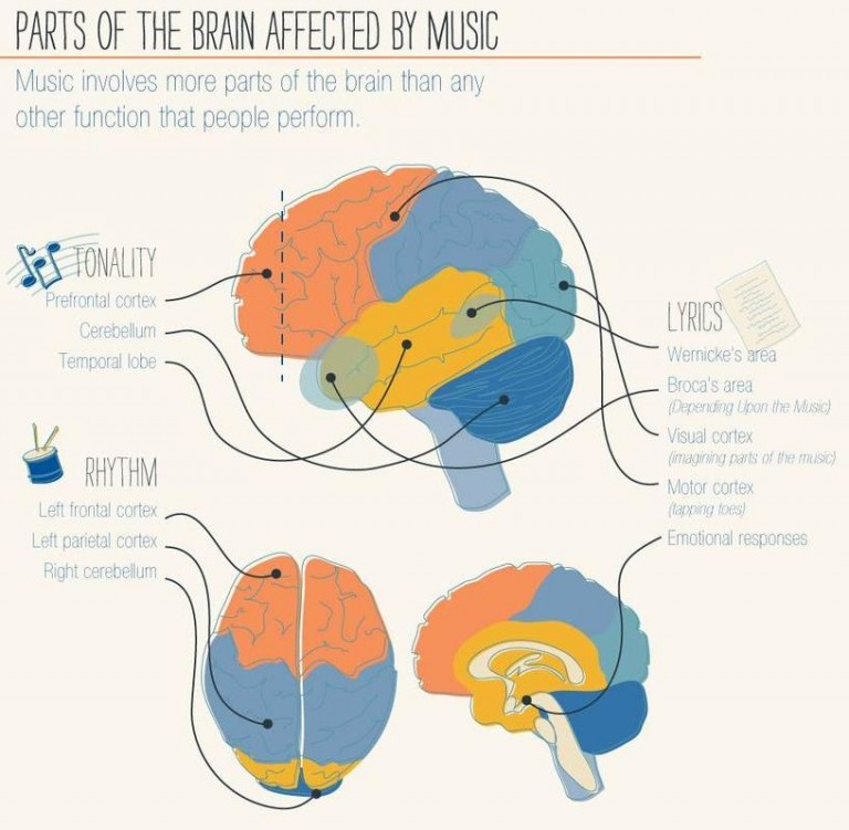 the effect of music on human performance from a psychological point of view Music moves brain to pay attention, stanford but at the transition point between a popular book called this is your brain on music: the science of a human.
